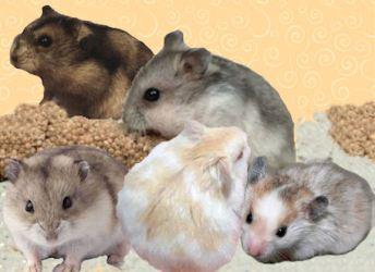 5 hamsters