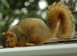 squirrel 02