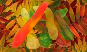 gummy leaves